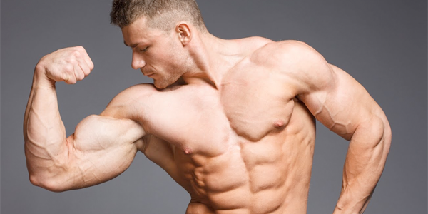 Muskeln Struktur und Physiologie